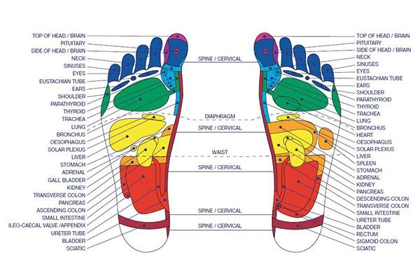 Рефлексология карта на точките по стъпалата